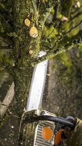 Alpinistyczna/Zwykła Kompleksowa Wycinka Drzew, Cięcie Opału,Rąbanie: zdjęcie 62091913