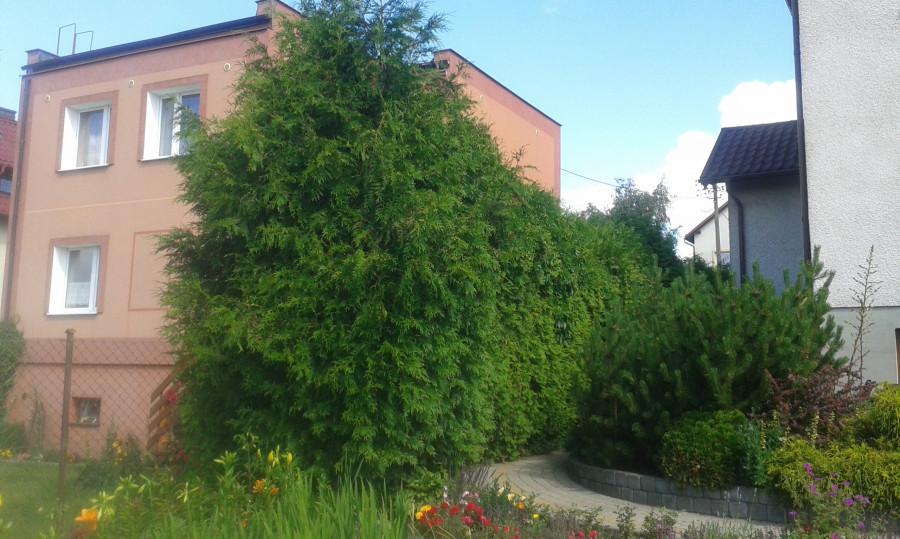 Alpinistyczna/Zwykła Kompleksowa Wycinka Drzew, Cięcie Opału,Rąbanie: zdjęcie 74430162