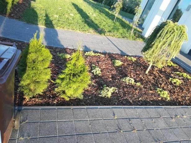 Ogrodnik, przycinanie drzew i krzewów. Wiosenne porzadki.: zdjęcie 79242512
