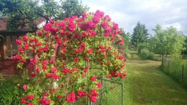 Ogrodnik, porządki wertykulacja, przycinanie, opryski i inne.