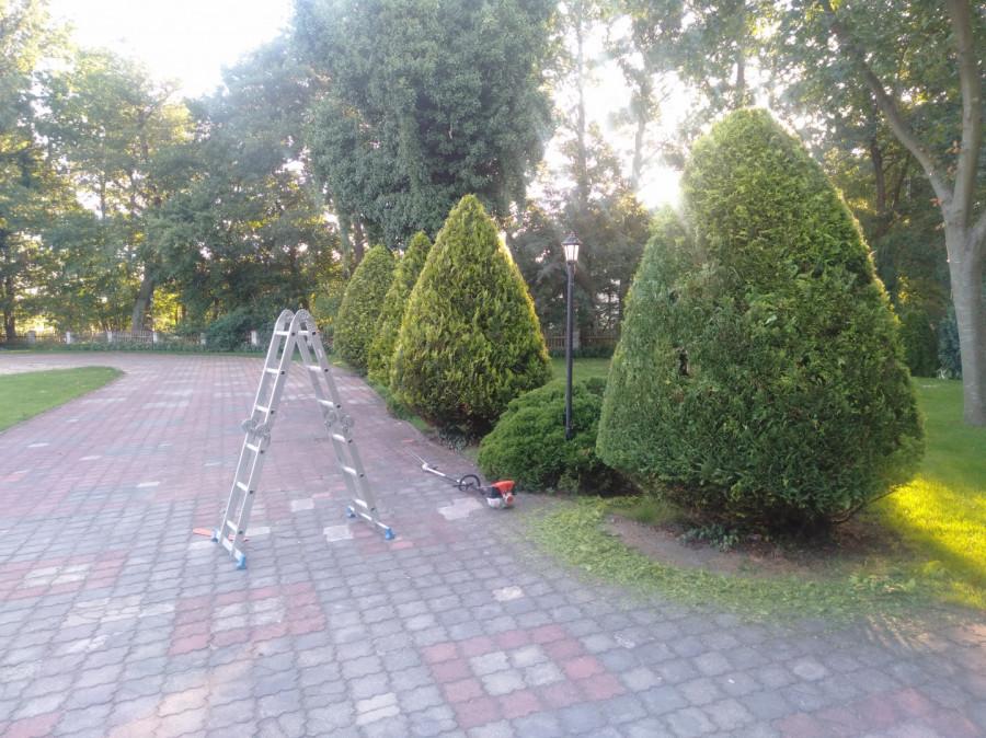 Usługi Ogrodnicze: zdjęcie 87654951