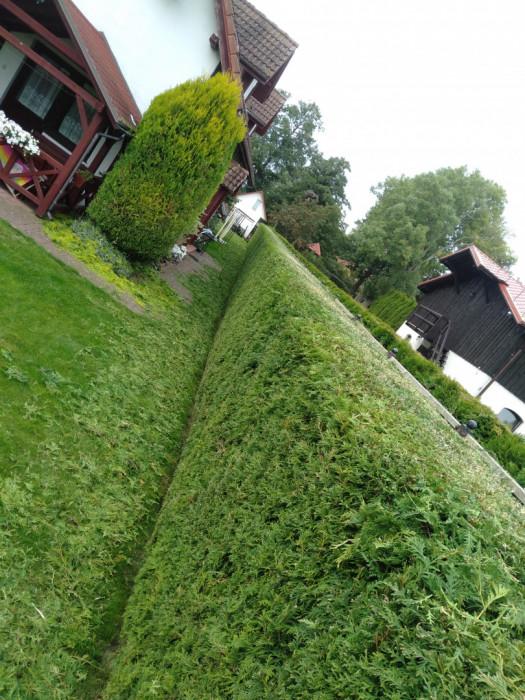 Usługi Ogrodnicze: zdjęcie 87654952