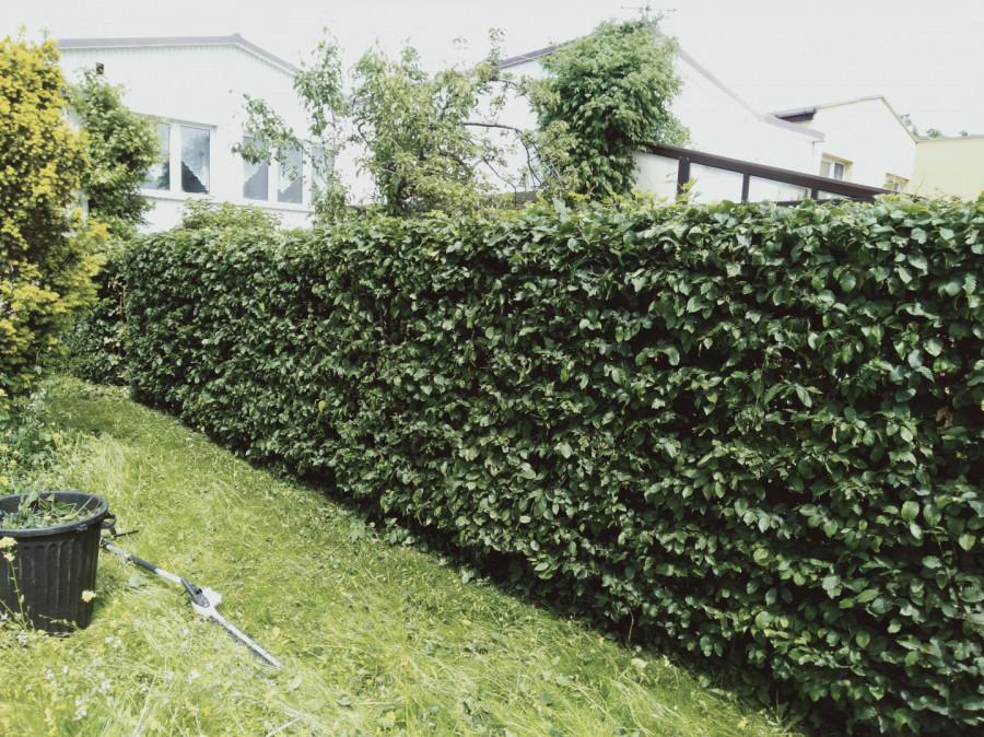 Usługi Ogrodnicze: zdjęcie 87654953