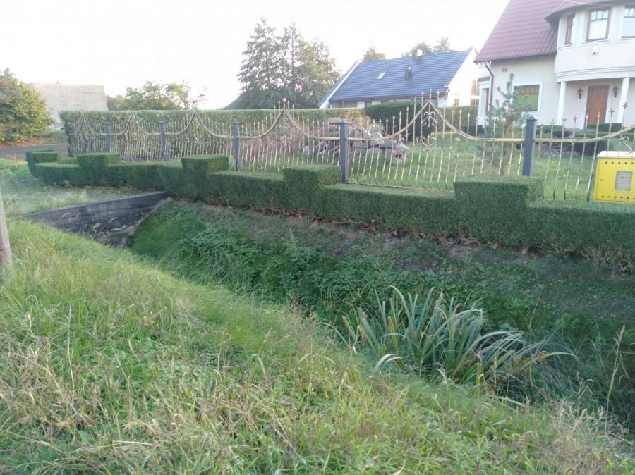 Usługi Ogrodnicze: zdjęcie 87831342