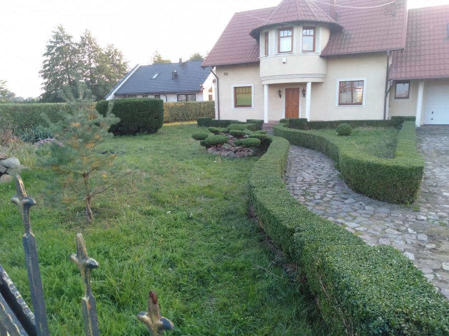 Usługi Ogrodnicze: zdjęcie 87831343