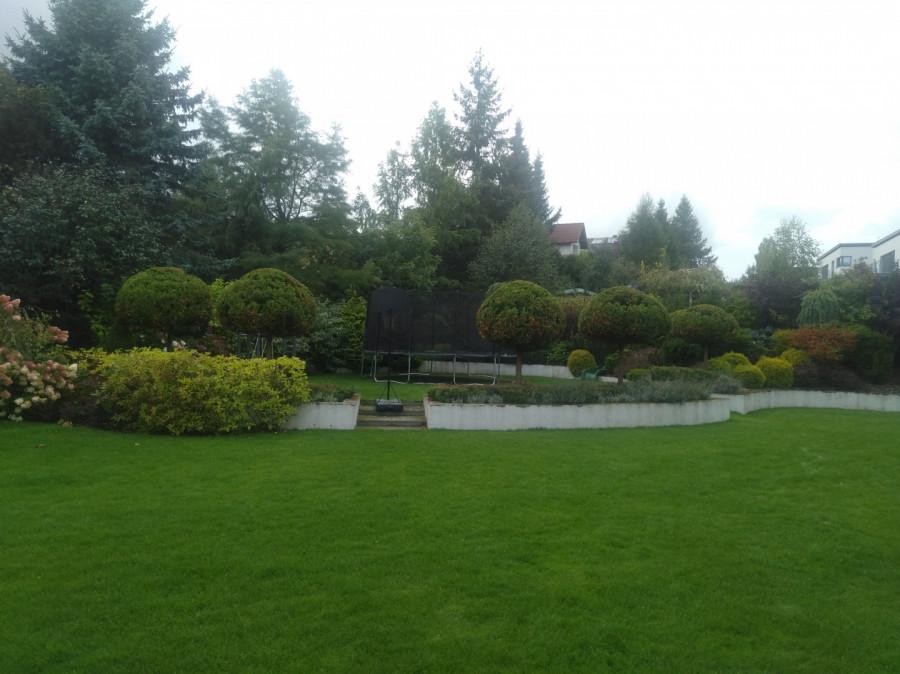 Usługi Ogrodnicze: zdjęcie 87831344