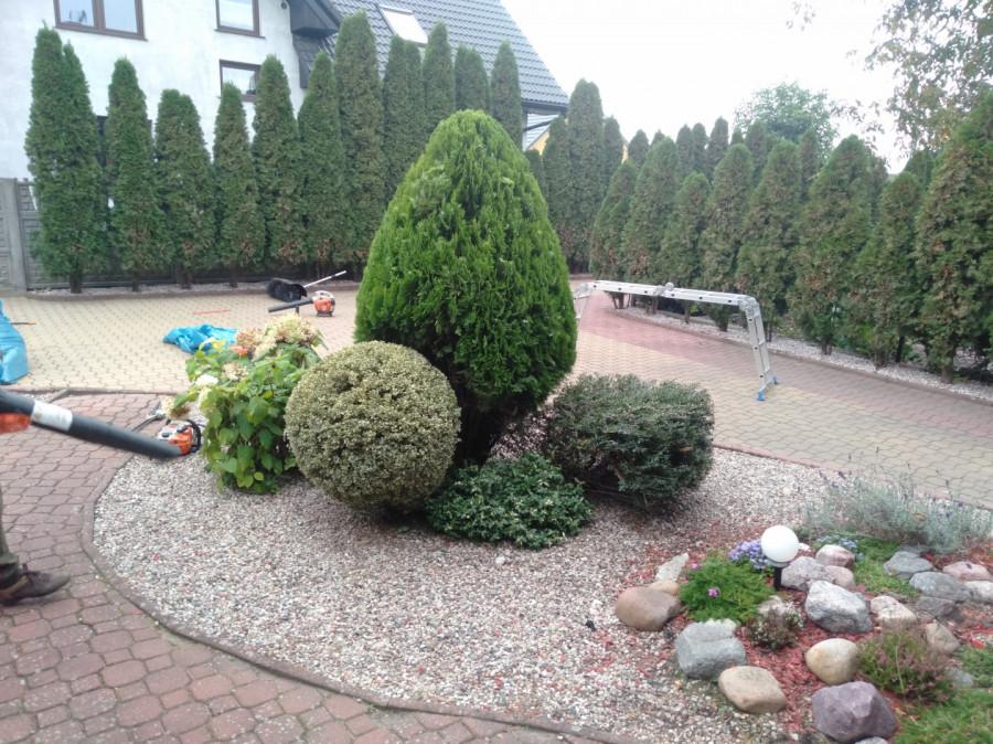 Usługi Ogrodnicze: zdjęcie 87831346