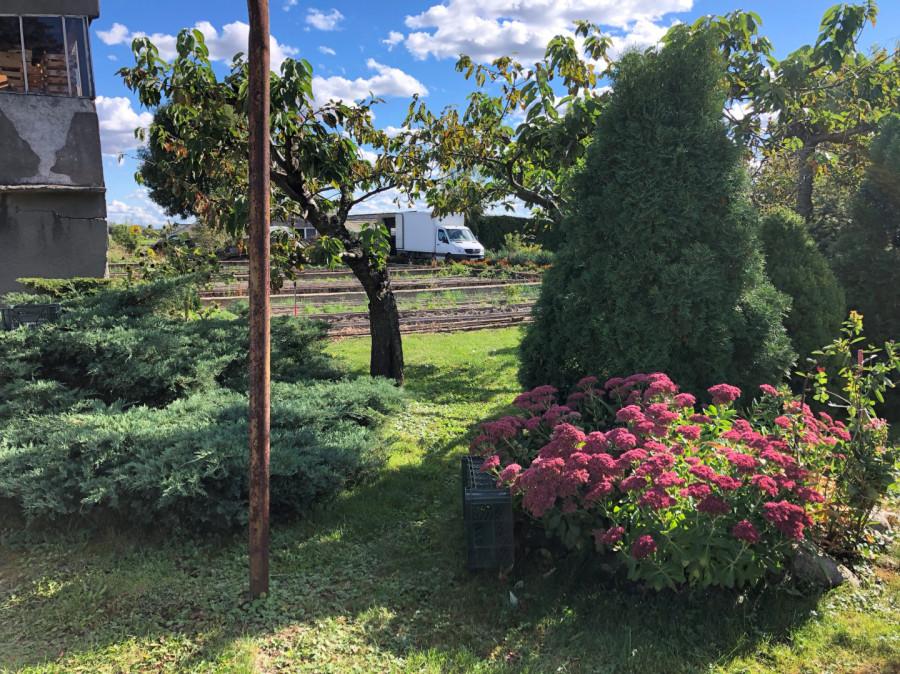 Usługi ogrodnicze (wysoka jakość): zdjęcie 86660489