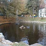 Foki w gdańskim zoo