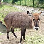Gdańskie Zoo