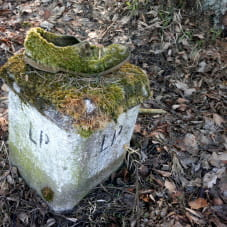 Zarośnięty mchem but w Dolinie Radości