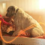 Duże, solidne pokoje zapewniają komfort najbardziej wymagającym psom.