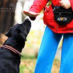 Trening psa i właściciela... tylko to ma sens.