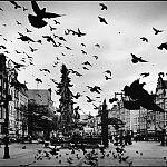 Gdańskie gołębie