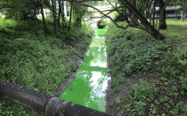 Zielona Strzyza...