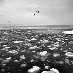 Bryły lodu na Zatoce Gdańskiej