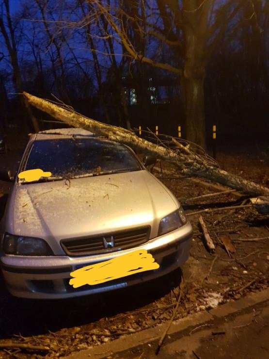 Powalone drzewo i uszkodzone auto na Wyspiańskiego koło akademików