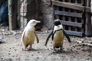 Całoroczna gastronomia dla gości zoo