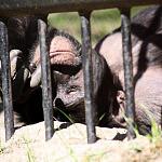 zwierzaki z Zoo