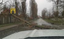 Powalone drzewo na ulicy Wiesława na...