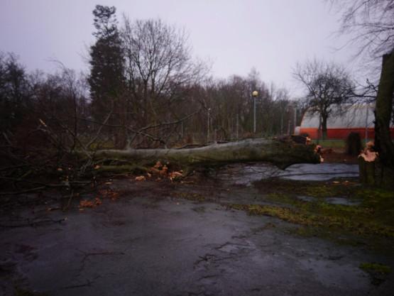 Silny wiatr przewraca drzewa i śmietniki