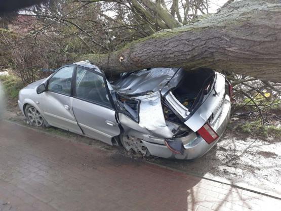 Drzewo przygniotło auto na Kartuskiej