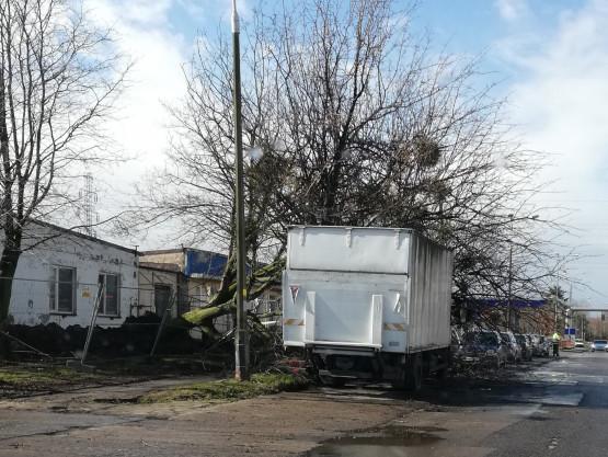 Drzewo przewróciło się na ciężarówkę w Nowym Porcie
