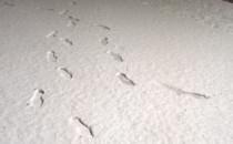 Śnieg w Trójmieście