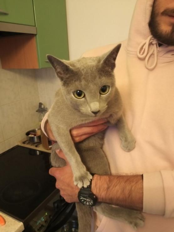 Znaleziony kot w Sopocie