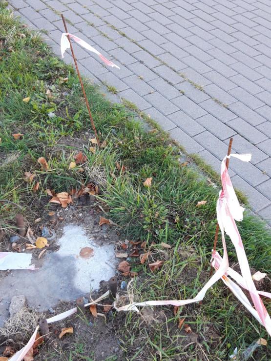 Niebezpieczne pręty wystają z trawnika w Oliwie