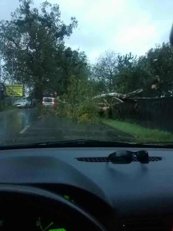 Powalone drzewo na Kochanowskiego w Gdańsku