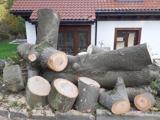 Wycinka drzew w Oliwie