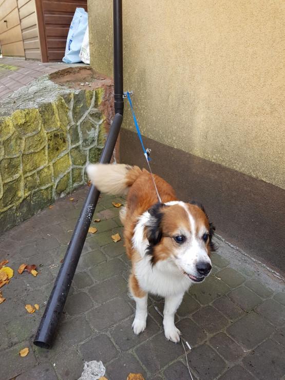 Pies znaleziony na Oksywiu
