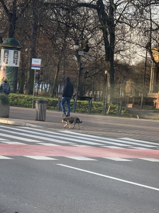 Czy ktoś nie szuka tego psiaka ?