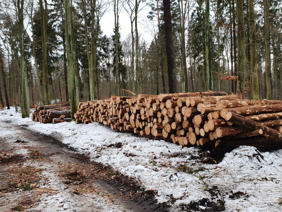 Wycinka lasu na Złotej Karczmie