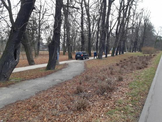 Auto jeździło po Parku Steffensa