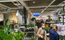 Tłumy w Ikei
