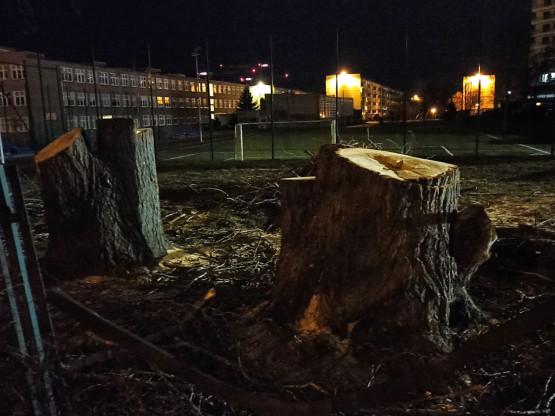 Komu przeszkadzały drzewa?