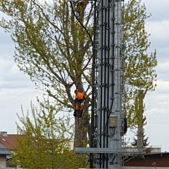 Wycinają ogromne drzewa na Jasieniu