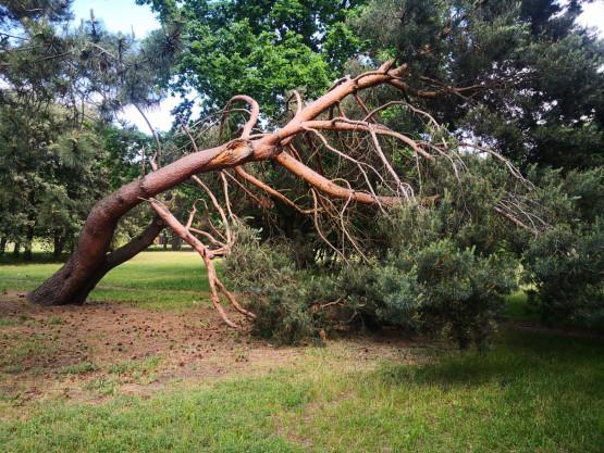 Szkoda drzewka....