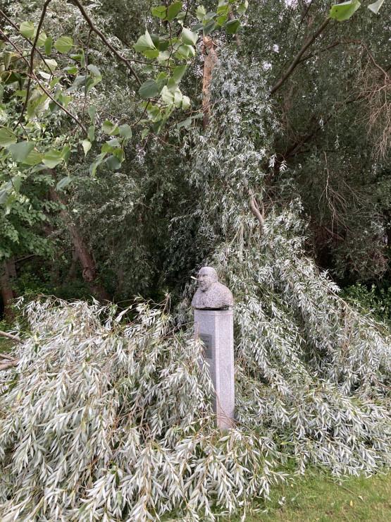 Połamane drzewo przy popiersiu Guntera Grassa