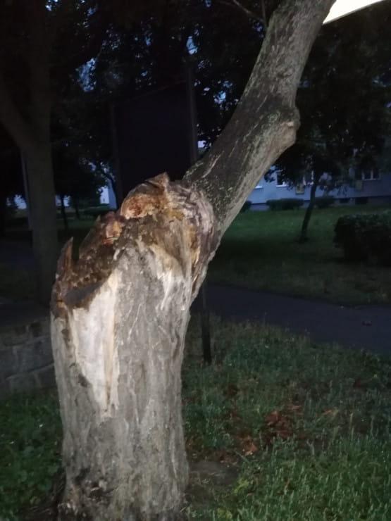 Połamane drzewo.
