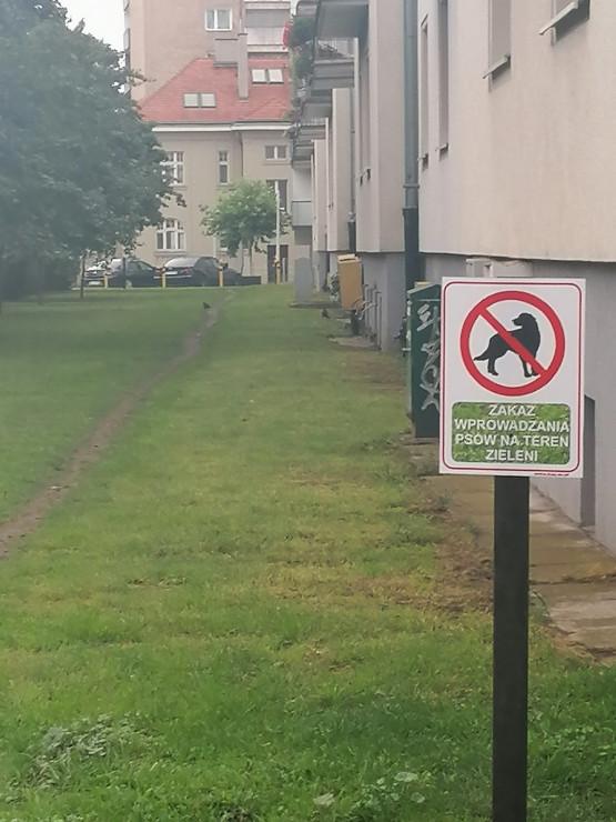 Zakaz wyprowadzania psów na trawnik przy ul. Bema w Gdyni