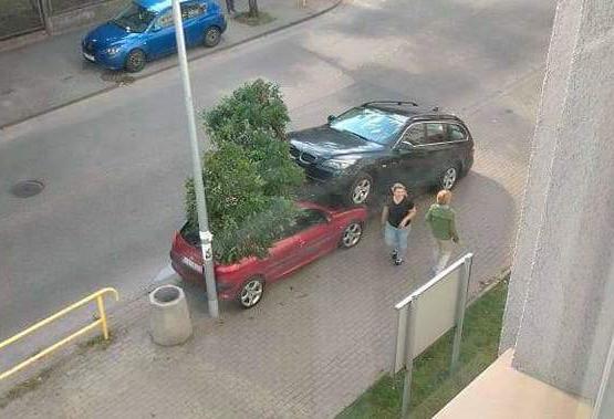 Auto wjechało w drzewo i na maskę drugiego