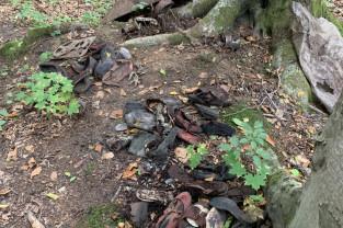Znalezisko w lesie