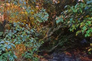 Ul. Latarniana, przewrócone drzewo