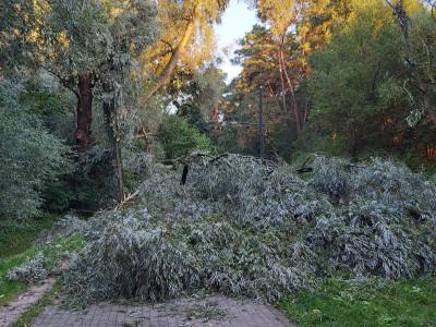 Drzewo złamane leży na chodniku, złamało latarnię