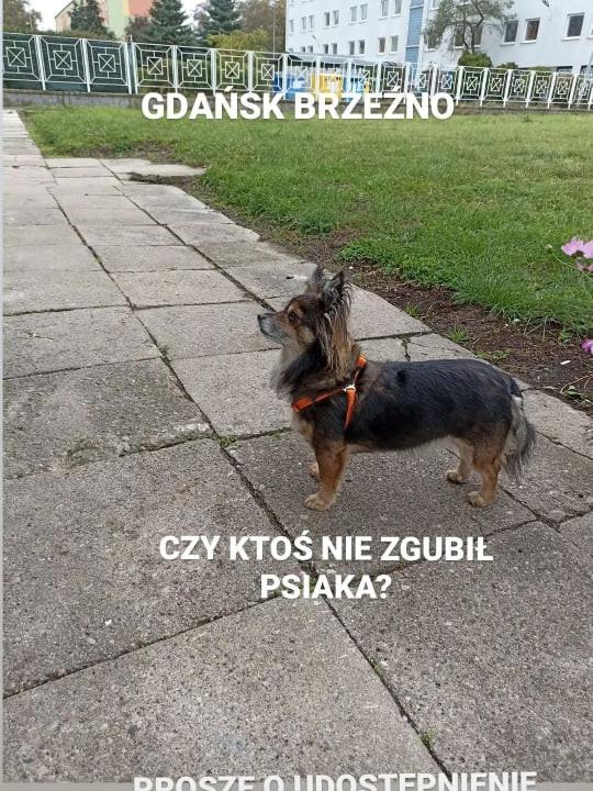 Znaleziono wałęsającego się psa
