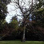 Ulubione drzewo par ślubnych