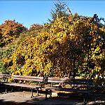 Park Oliwski jesienią